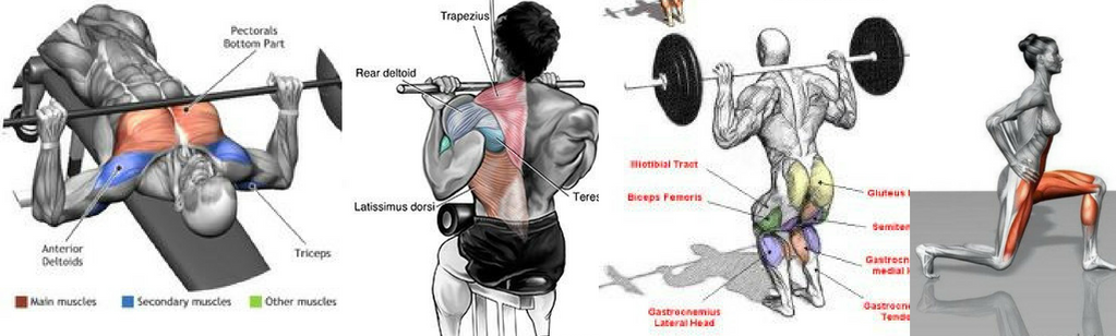 active-muscles